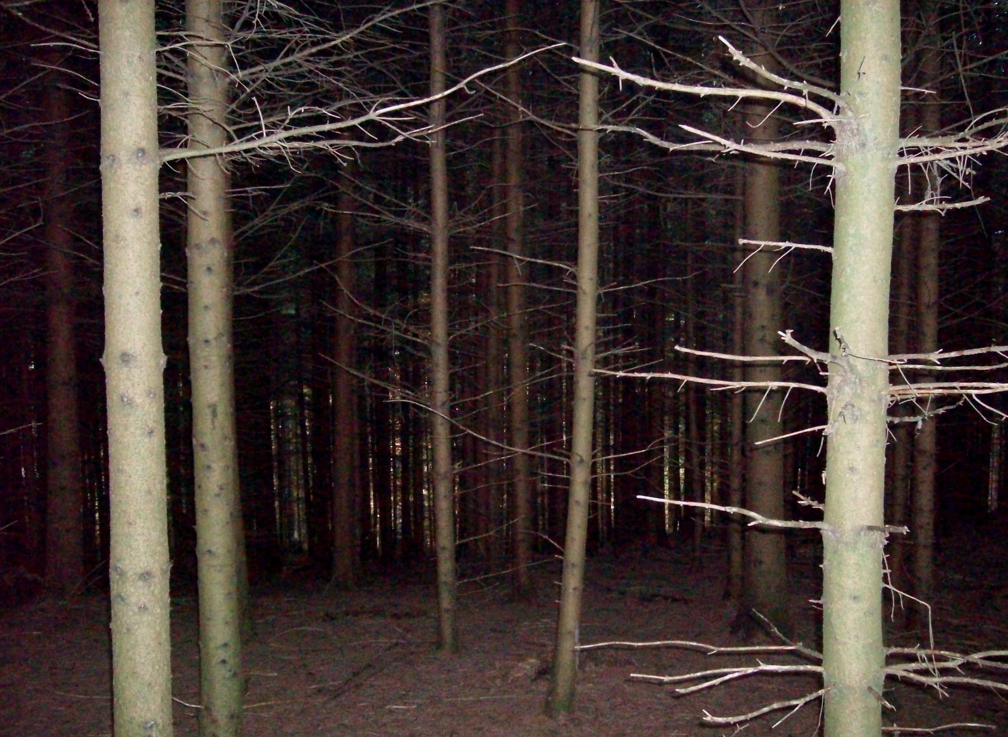 Schwarzwald-La-Nera-Foresta-Foto-Guido-Comin