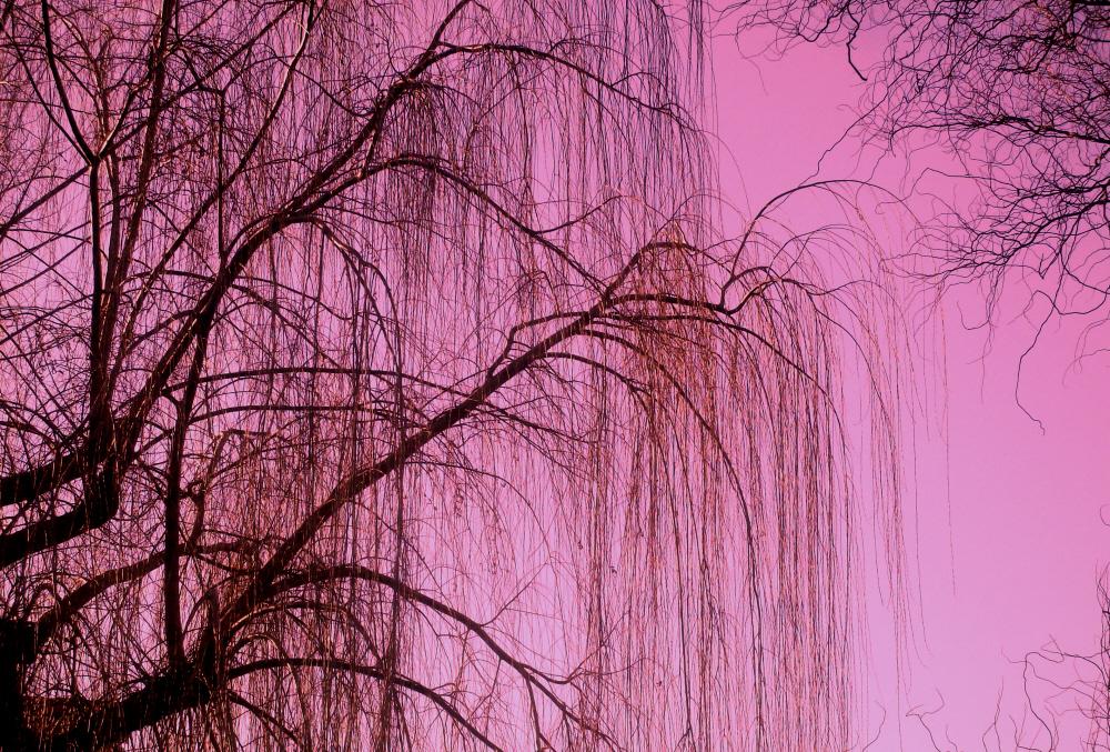 Salici-per-Quasimodo-Foto-Guido-Comin