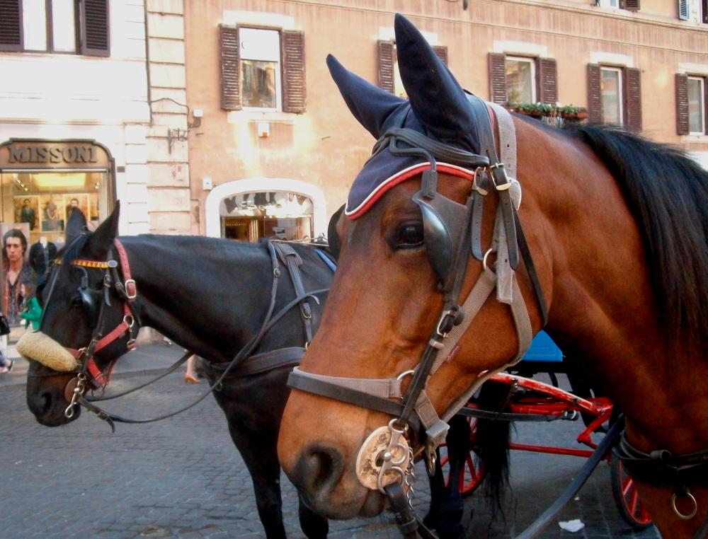Cavalli-in-Piazza-di-Spagna-Foto-Guido-Comin