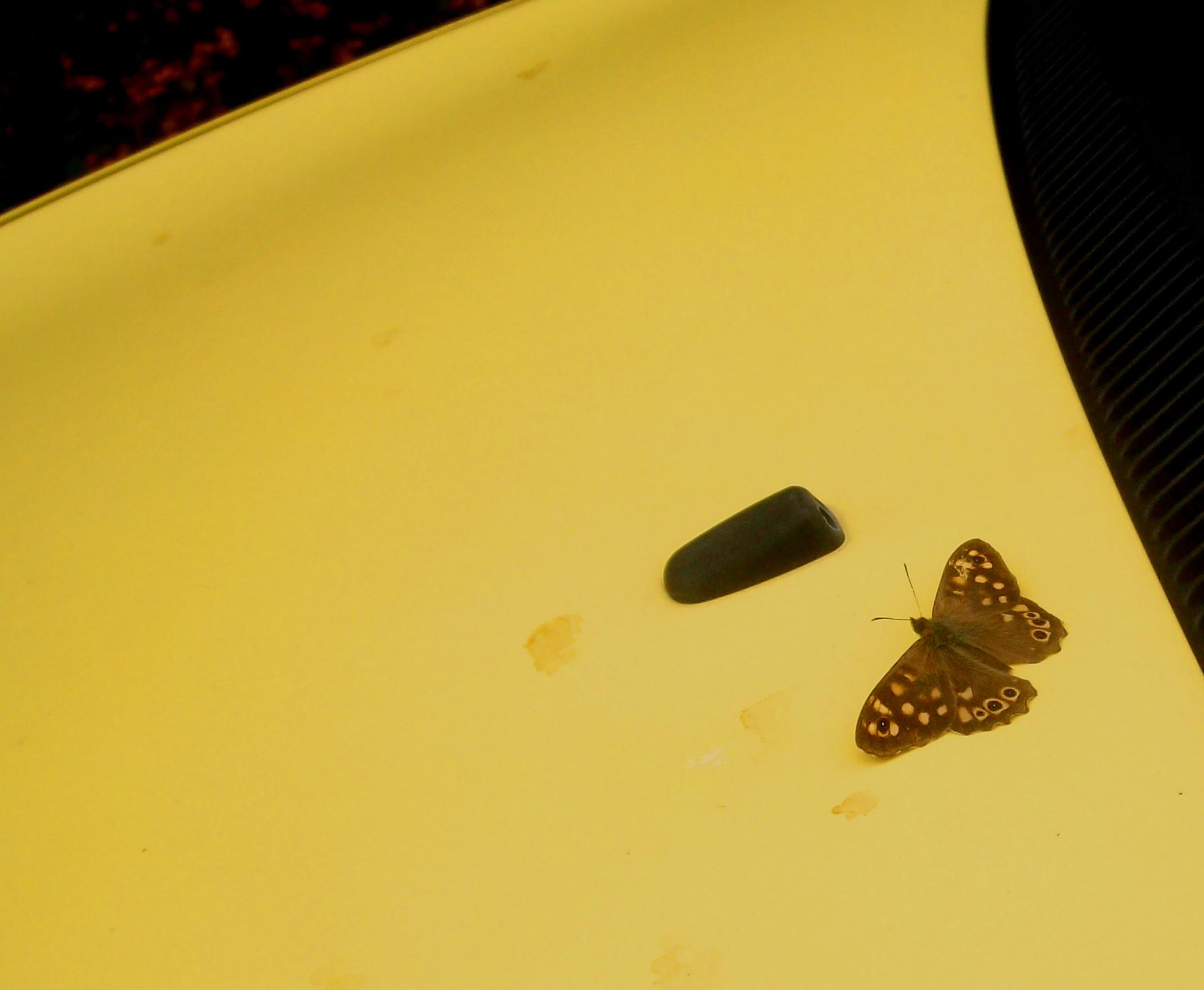 Farfalla cerca il caldo - Foto Guido Comin PoetaMatusèl