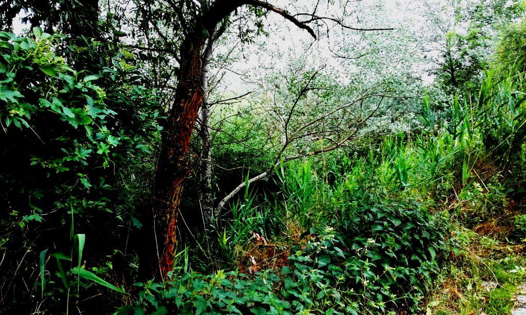 Nel folto del bosco - Foto Guido Comin PoetaMatusèl