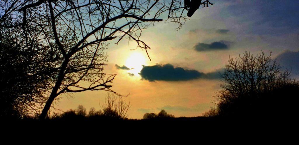 Rami spogli di tristi alberi - Foto Guido Comin PoetaMatusèl