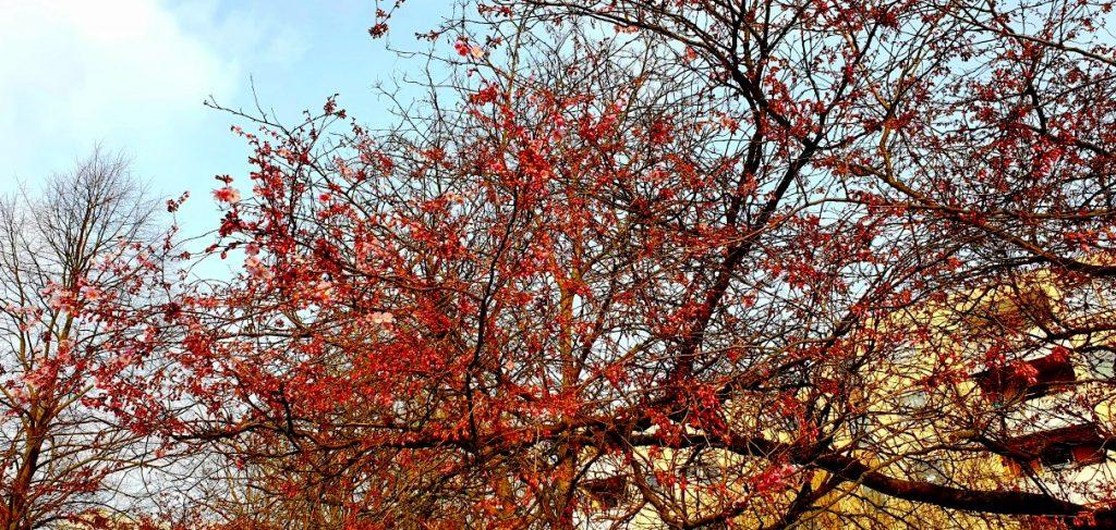 Rallegrano altri alberi... - Foto Guido Comin PoetaMatusèl