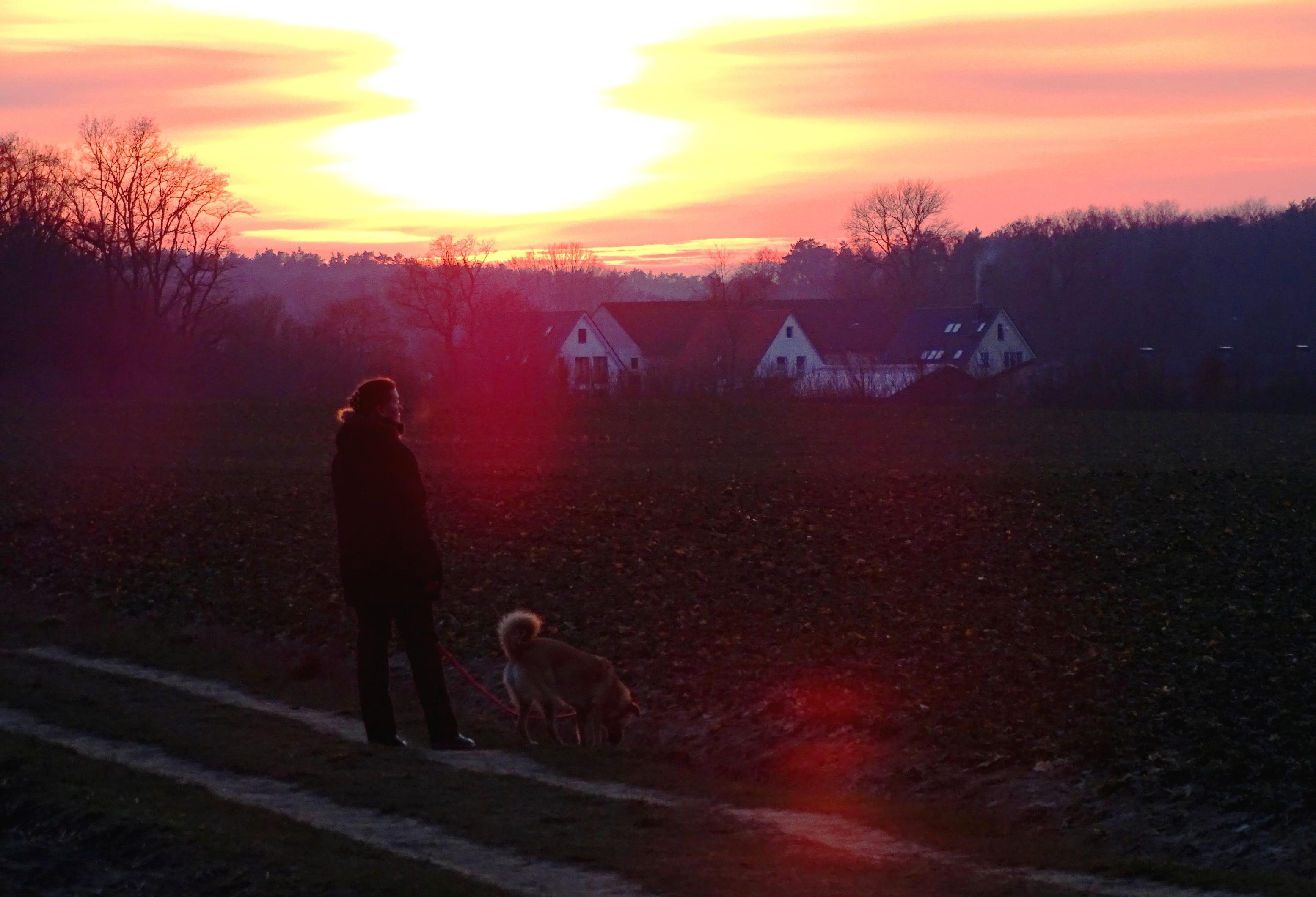 Cane al tramonto - Foto Guido Comin PoetaMatusèl